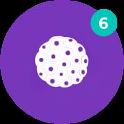 O6 Cultivo E